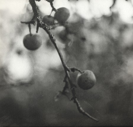 apples, 2005. liquid emulsion